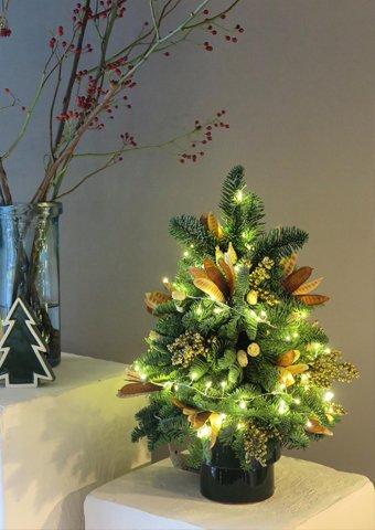 DOLAMITE / Yılbaşı Ağacı